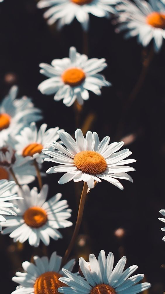 Sunflowers and daisies wallpaper