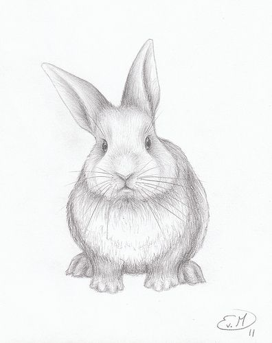 how to draw rabbits realistic recherche google drawings sketches