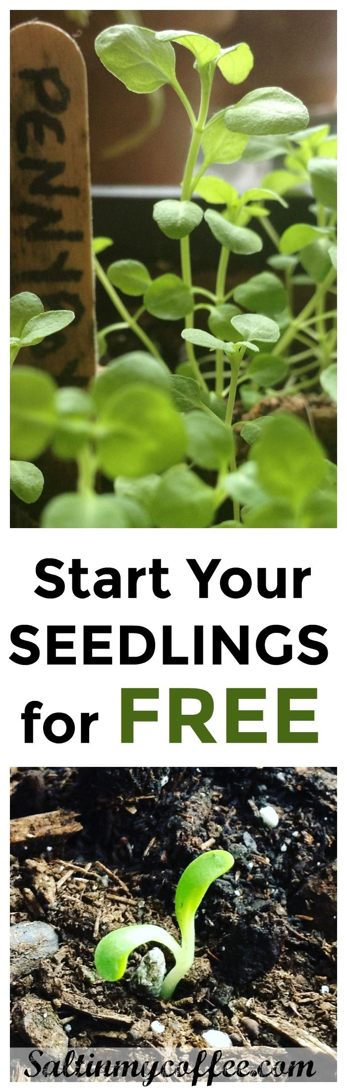 Frustrated by the cost of seed starting supplies? Do you wish you could start seedlings for free, and enjoy a bountiful garden without the cost of peat pots and seed-starting mix? Try these tips to start seedlings for free, year after year!