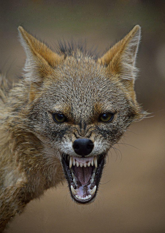 {title} (mit Bildern) Tiere wild, Afrikanische tiere