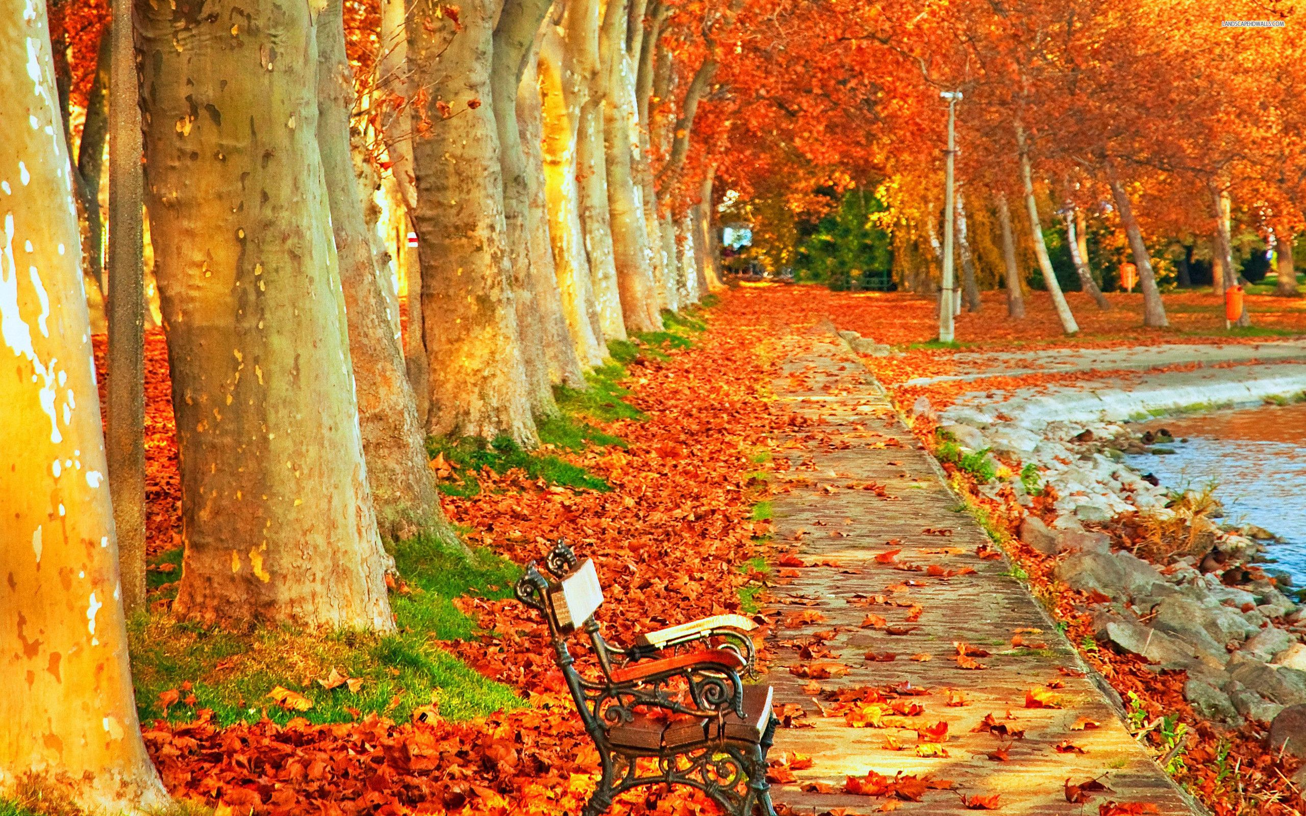park-autumn-scenery-in-high-resolution 2,560×1,600 pixels