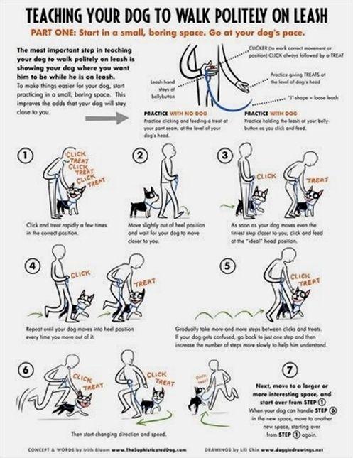 Dog Training For Protection Dog Training Usb Dog Training 8