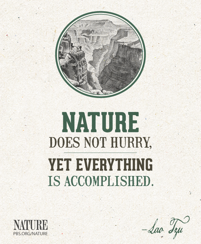 A Quote From Chinese Philosopher Lao Tzu Nature Quotes