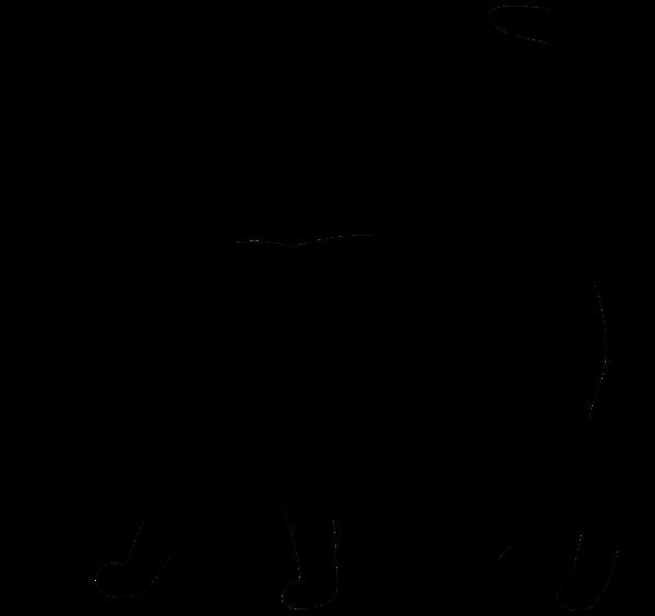 Cat Silhouette Png Transparent Clip Art Image Black Cat Silhouette Art Images Cat Silhouette