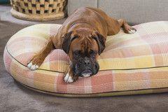 Custom Vintage Wool Blanket Dog Bed