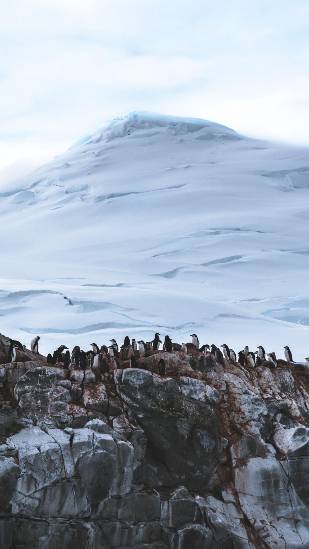 Wallpapers snow, penguins, desert, wilderness, Penguin