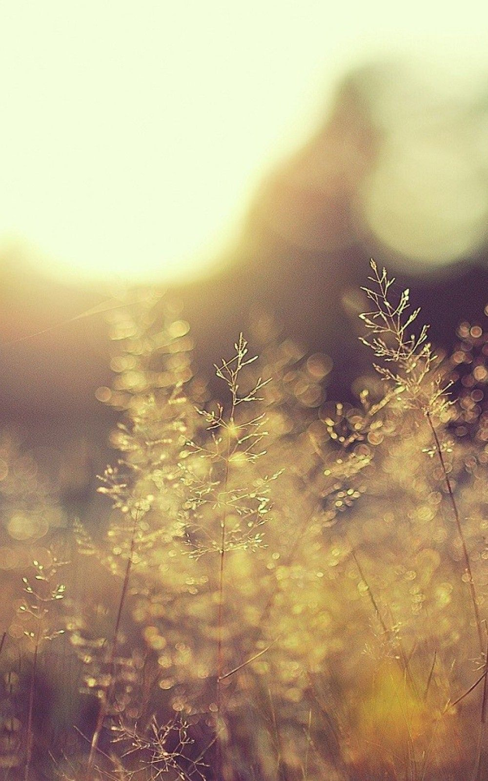 Nature iPhone 6 Plus Wallpapers Blurred Grass Bokeh