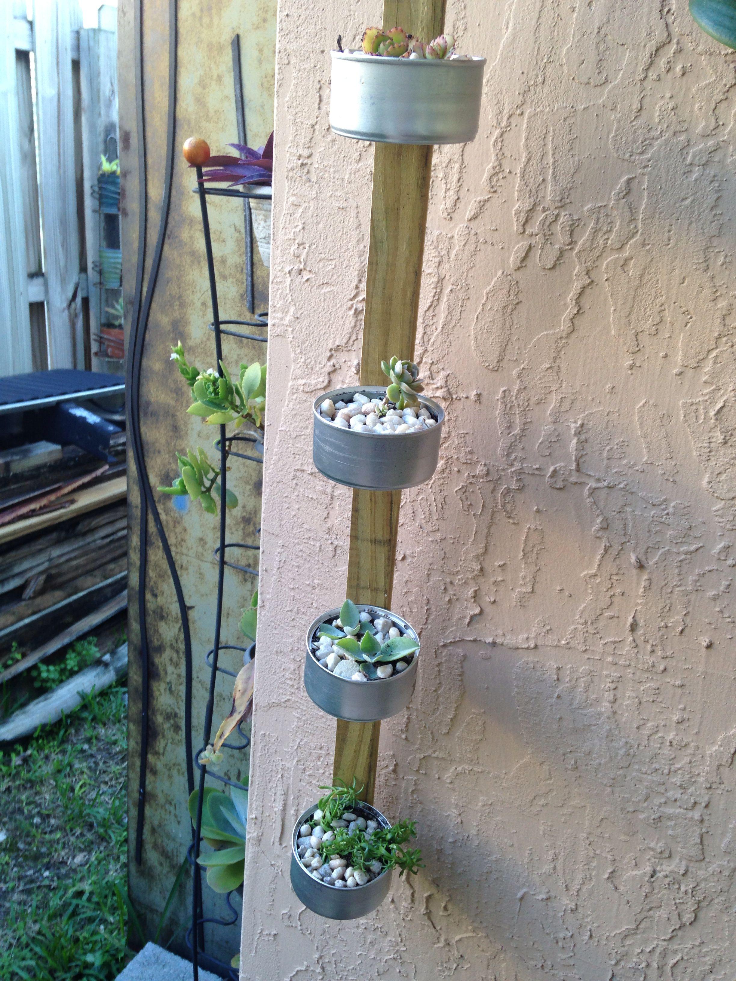 Para plantar cactus: Yo uso latas de comida de mi gato y las pego en una madera , le hecho tierra ,piedras pequeñas  y siembro los cactus.