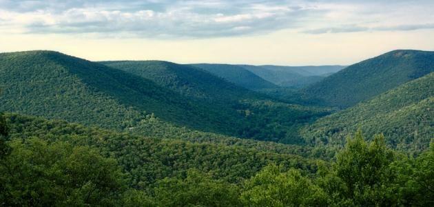 اين يقع الجبل الاسود Forest Trail Black Forest State Forest