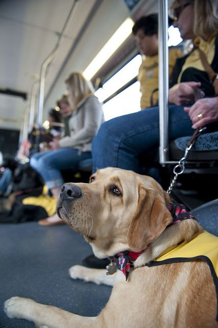 Guide Dogs Of America Puppy Training On Foothill Transit Guide