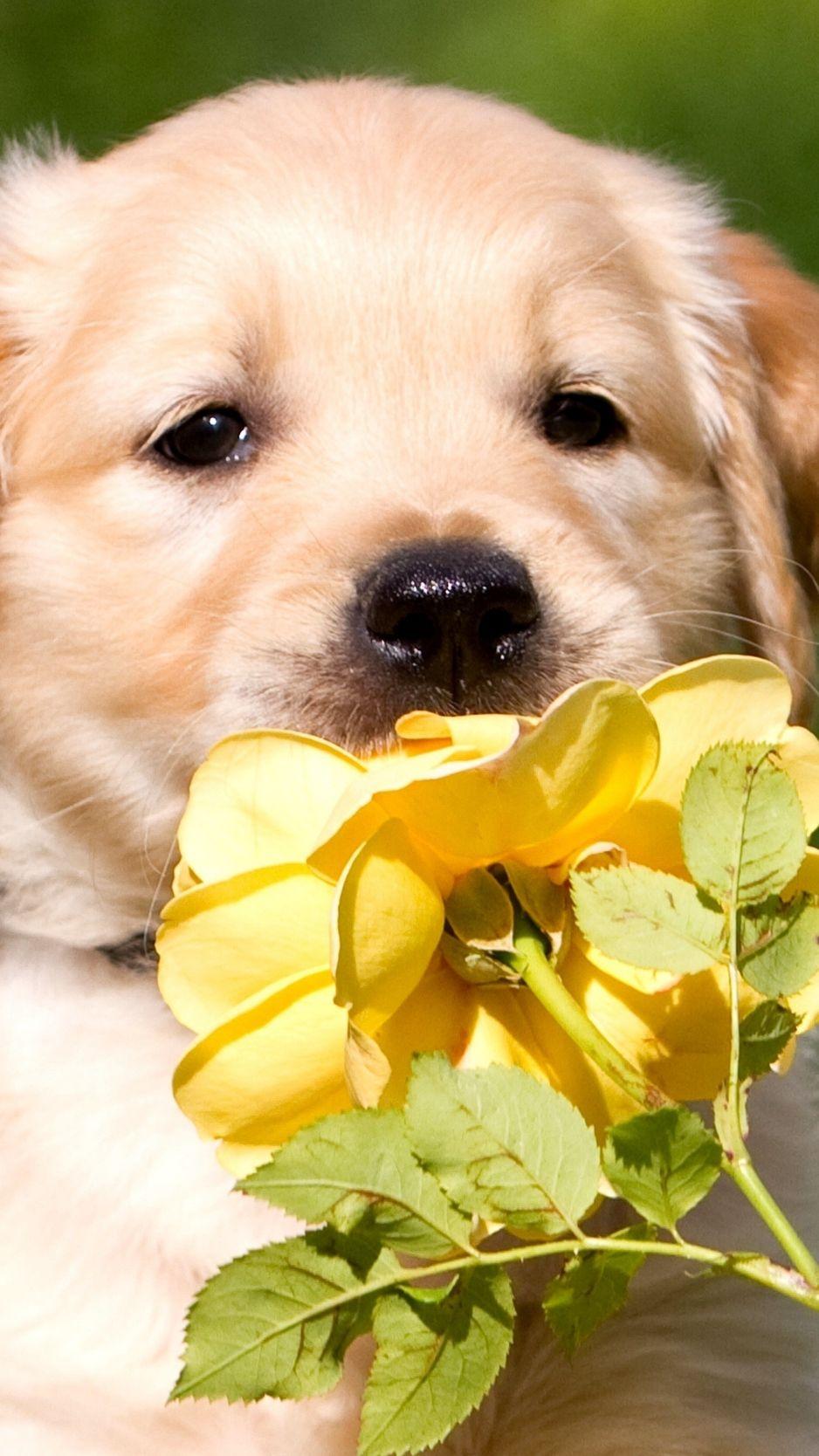 Puppies에 있는 Jubeth Ferrer님의 핀 강아지, 강아지 그림, 배경