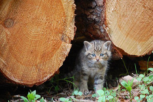 #WWF Sonderpreis Wildkatzenland geht an Jagdverein #jagdwechsel #jagd #jäger