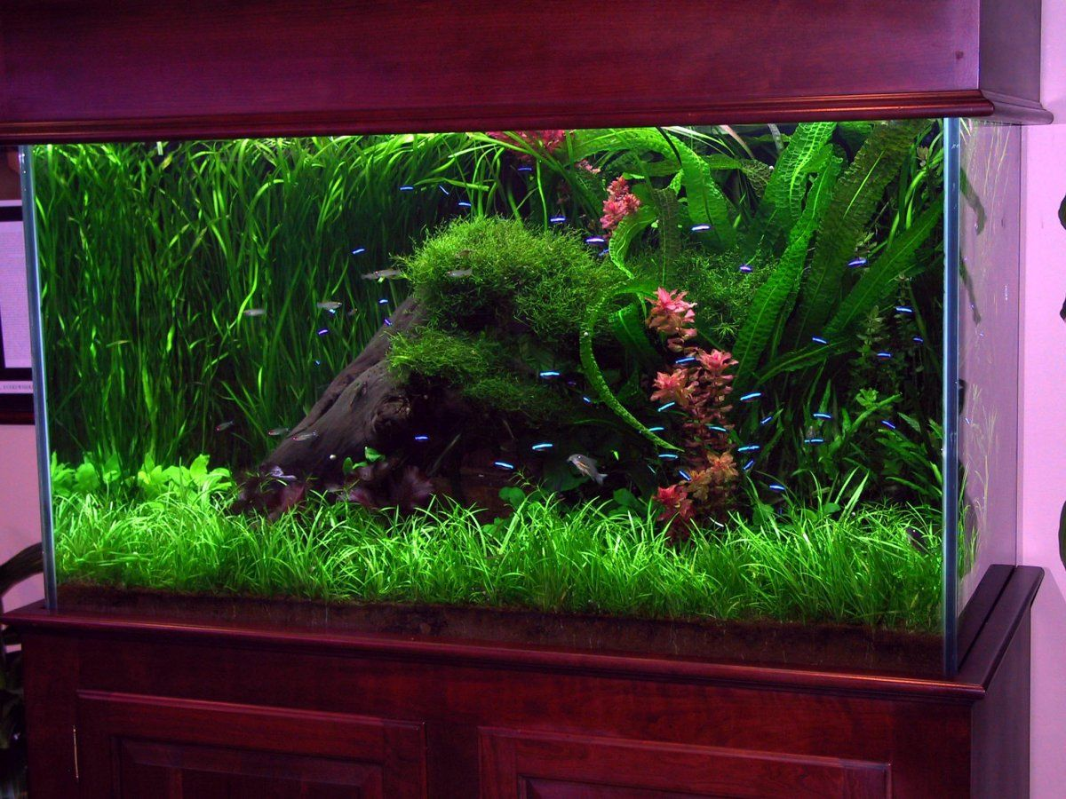Fish aquarium ornaments - Fish Tank Ideas With Fresh Green Aquarium Ornament