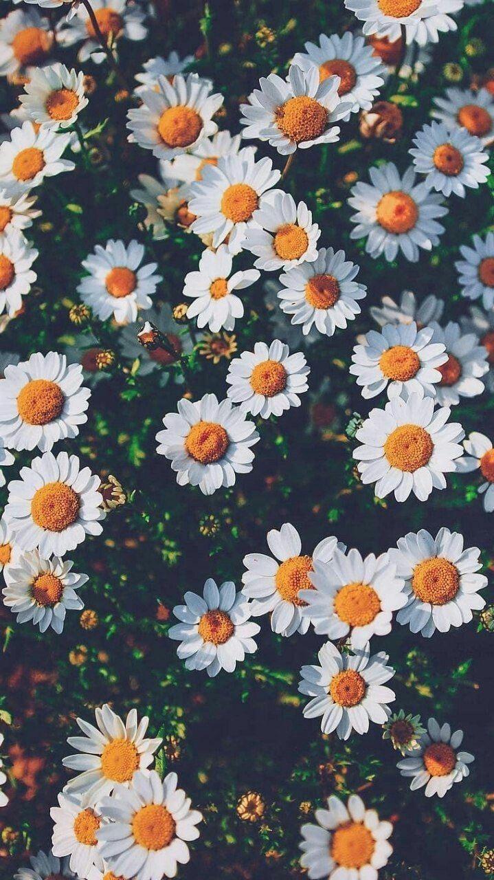 Pin by Парфёнова Мария Юриивна on Обои на телефон Flower