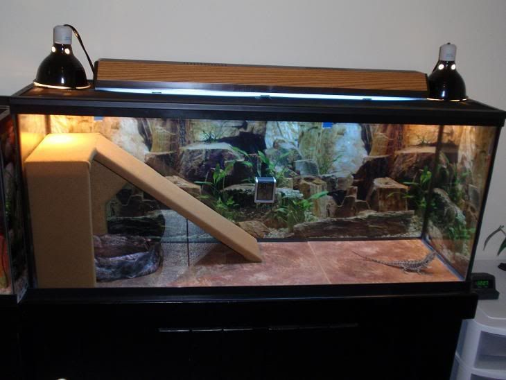 Reptile Cages Homemade With Images Bearded Dragon Bearded