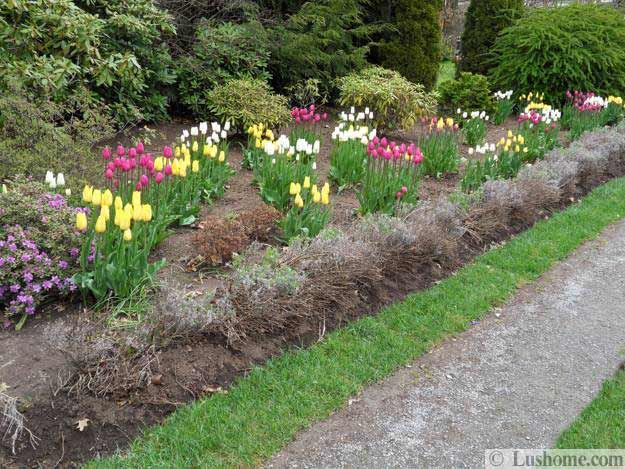 Spring Flowers And Yard Landscaping Ideas, 20 Tulip Bed Design Ideas