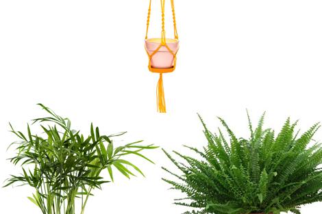 5 plantes d polluantes tendances faciles d 39 entretien plantes d polluantes pinterest. Black Bedroom Furniture Sets. Home Design Ideas