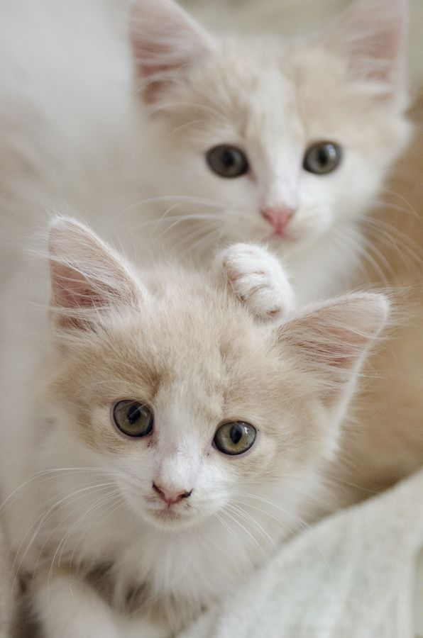 We Quickly Discovered That 2 Kittens Were Much More Fun Than One