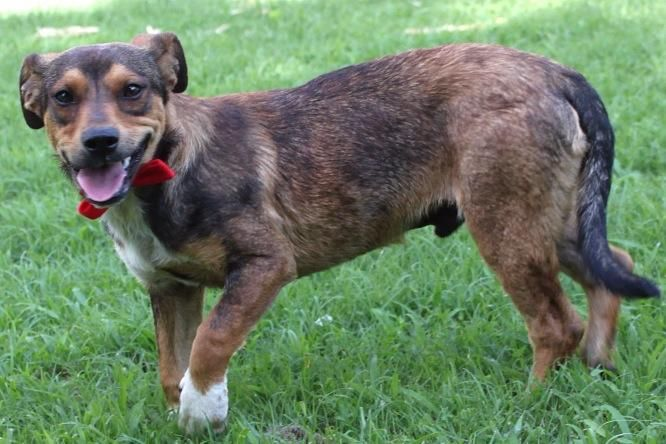 Adopt Rocco On Shepherd Mix Dog Animal Rescue Rescue Dogs