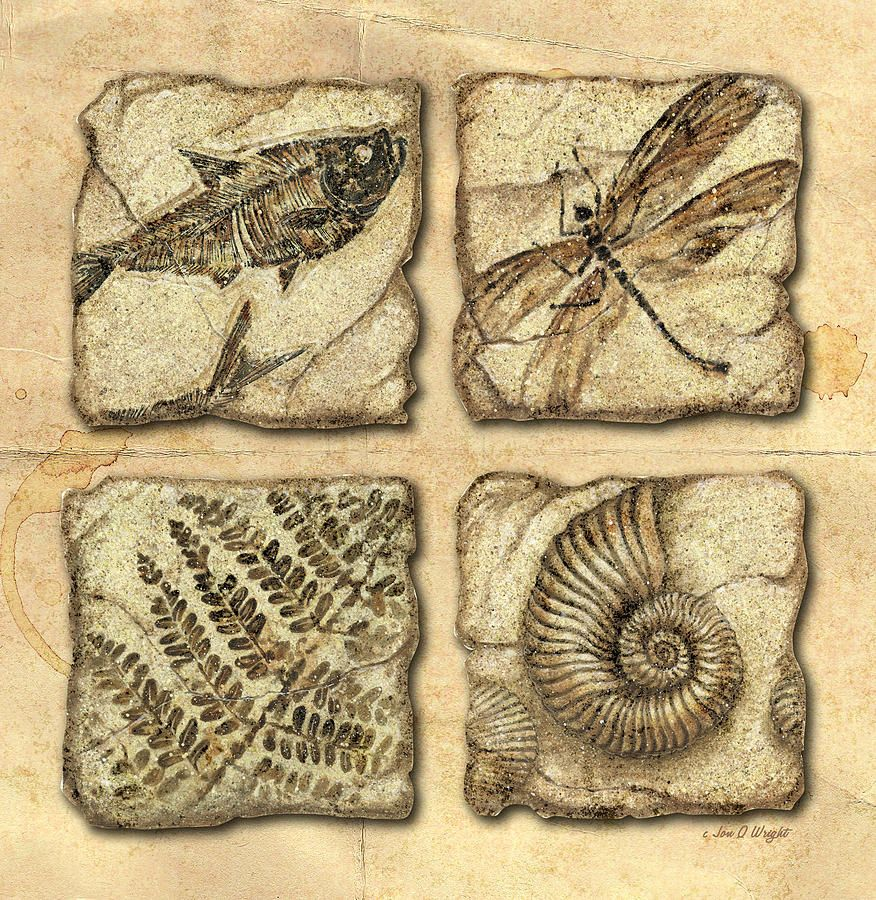 striking print of SHELL FRAGMENT mosaic STARFISH ultra matt print GREETING CARD