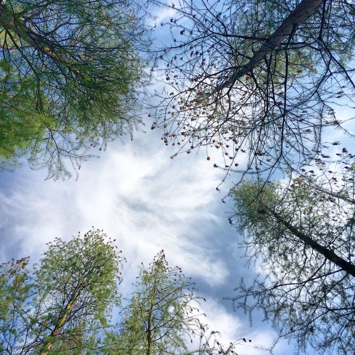 Lying on the grass and look up feel so relaxed.