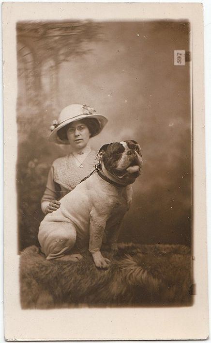 Pin On Mostly Vintage Bulldog Pictures And Postcards 3