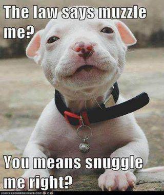 suggle me...