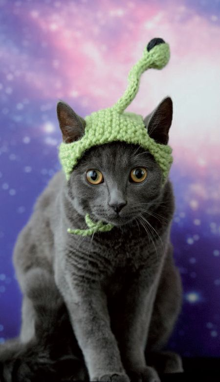 Knitted Alien Cat Hat (Free Knitting Pattern) | Labores de aguja ...