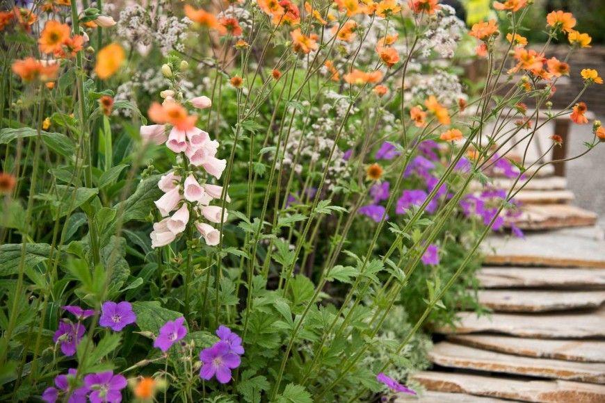 Traditional woodland Garden London UK Jo Thompson Landscape