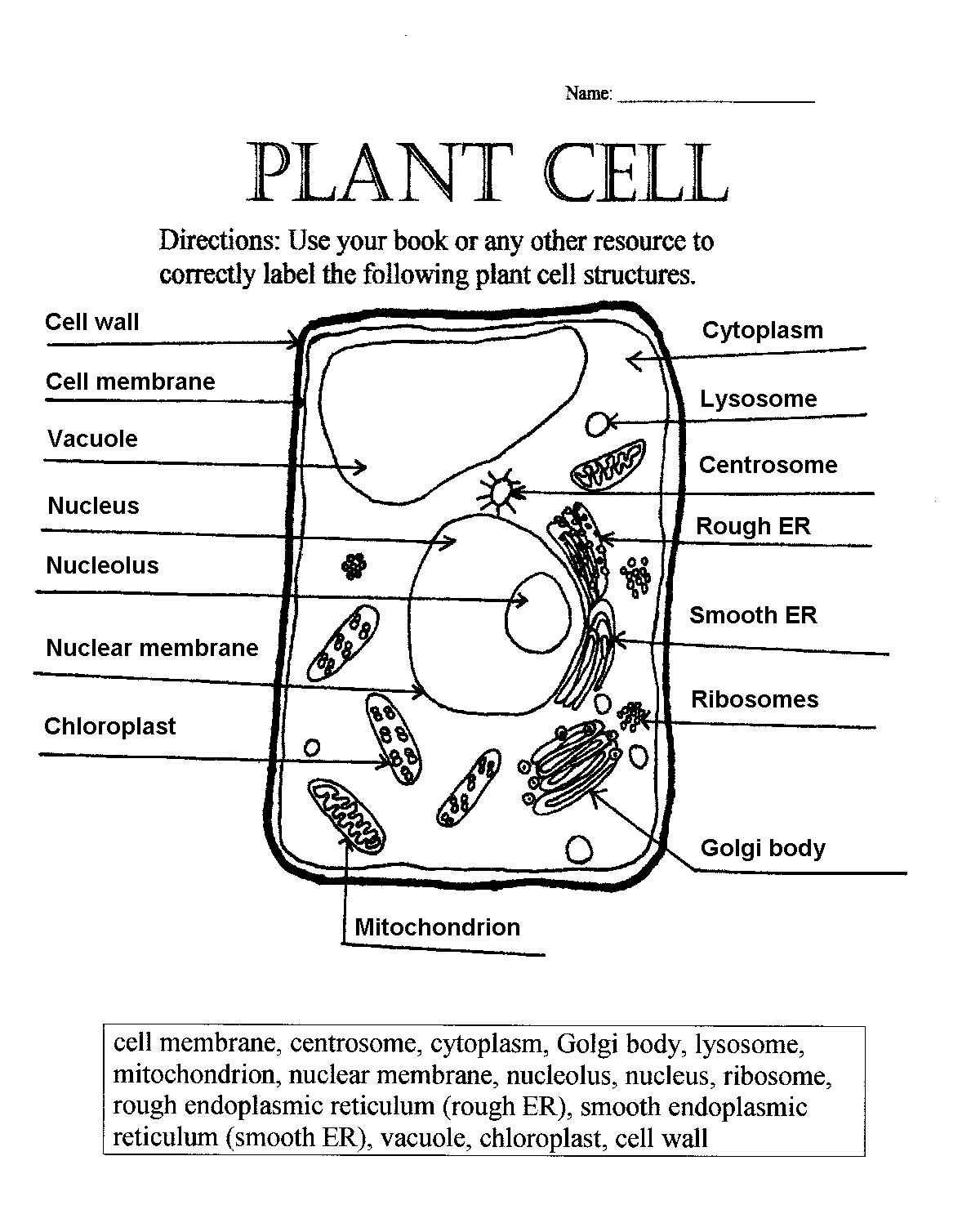 plant cell parts worksheet with word bank name what