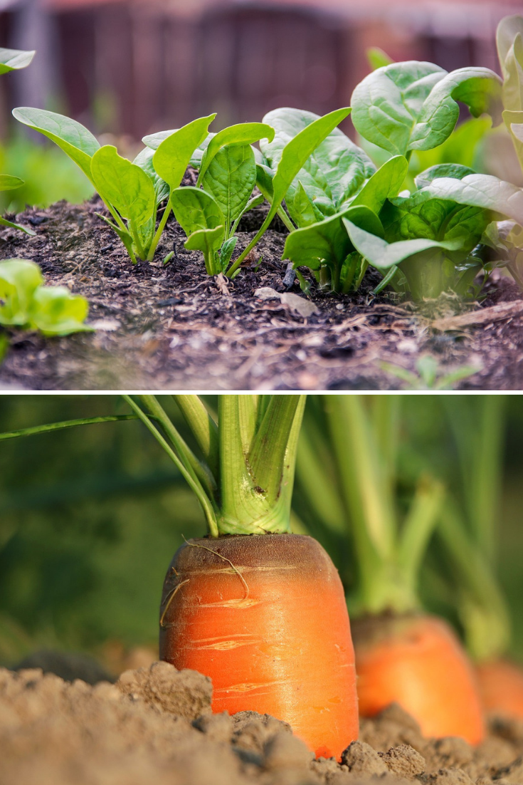 These 5 Easy To Grow Vegetables Can Flourish In Even The 400 x 300