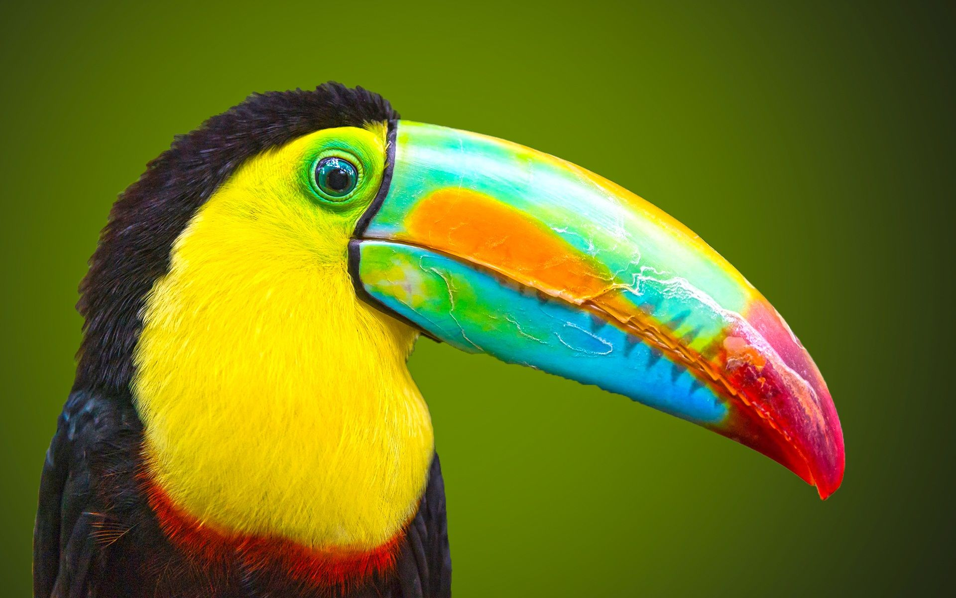 Big beak beautiful bird wallpaper | Beautiful hd wallpaper