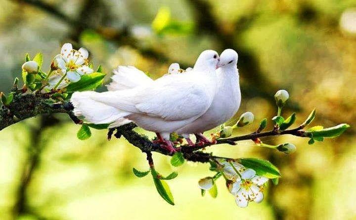 Yeşeren Nesil: وَمَا مِن دَآبَّةٍ فِي اْلأَرْضِ وَلاَ طَائِرٍ يَط...