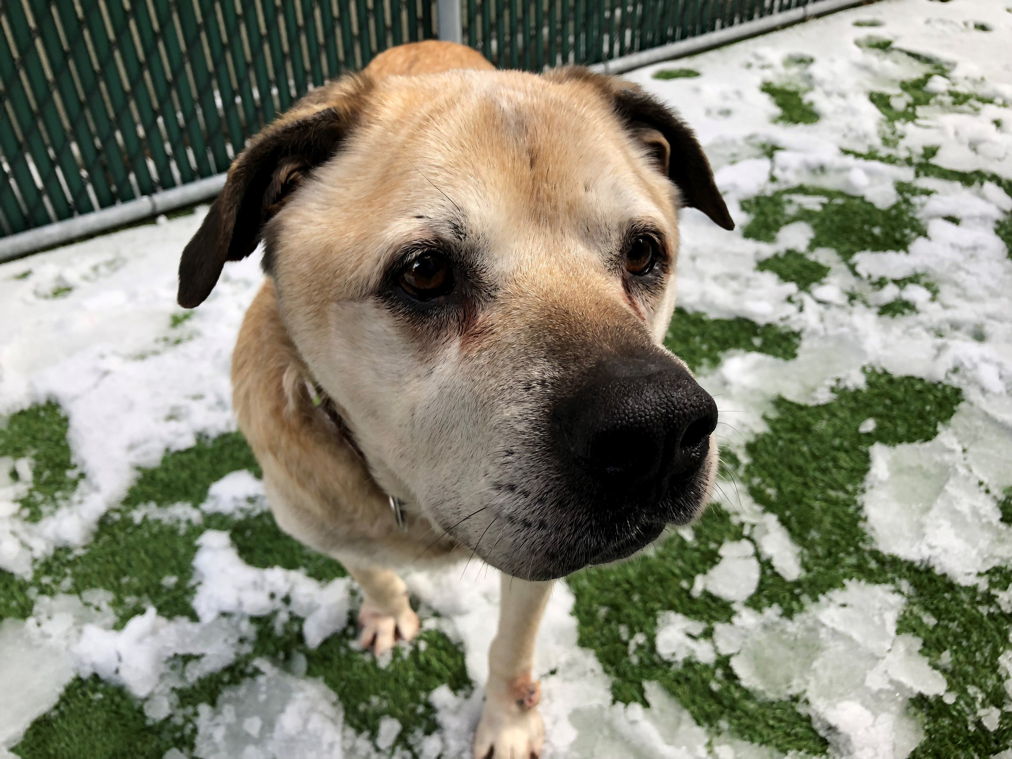 2 13 19 Scrappy Is Removed From The Kill List At Nyc Acc For 2 14 19 No Updates Given Pls Continue Sharing Ij2 Scrappy Dog Allergies Animals Pet Care