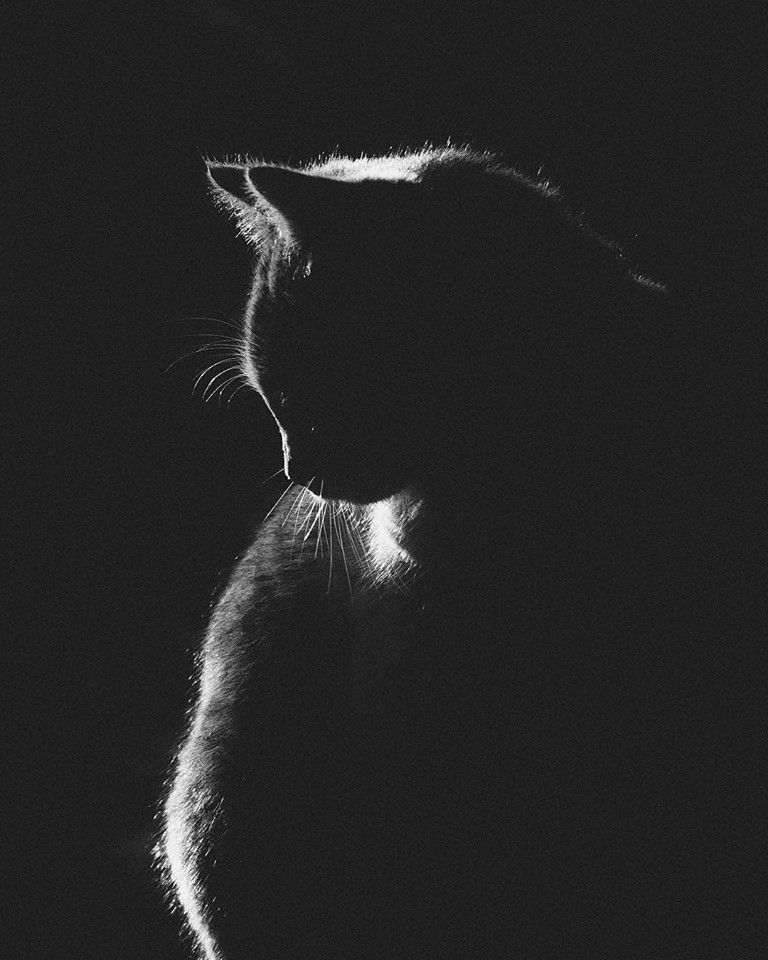 Greykittens Pets Cats Animal Photography Cat Wallpaper