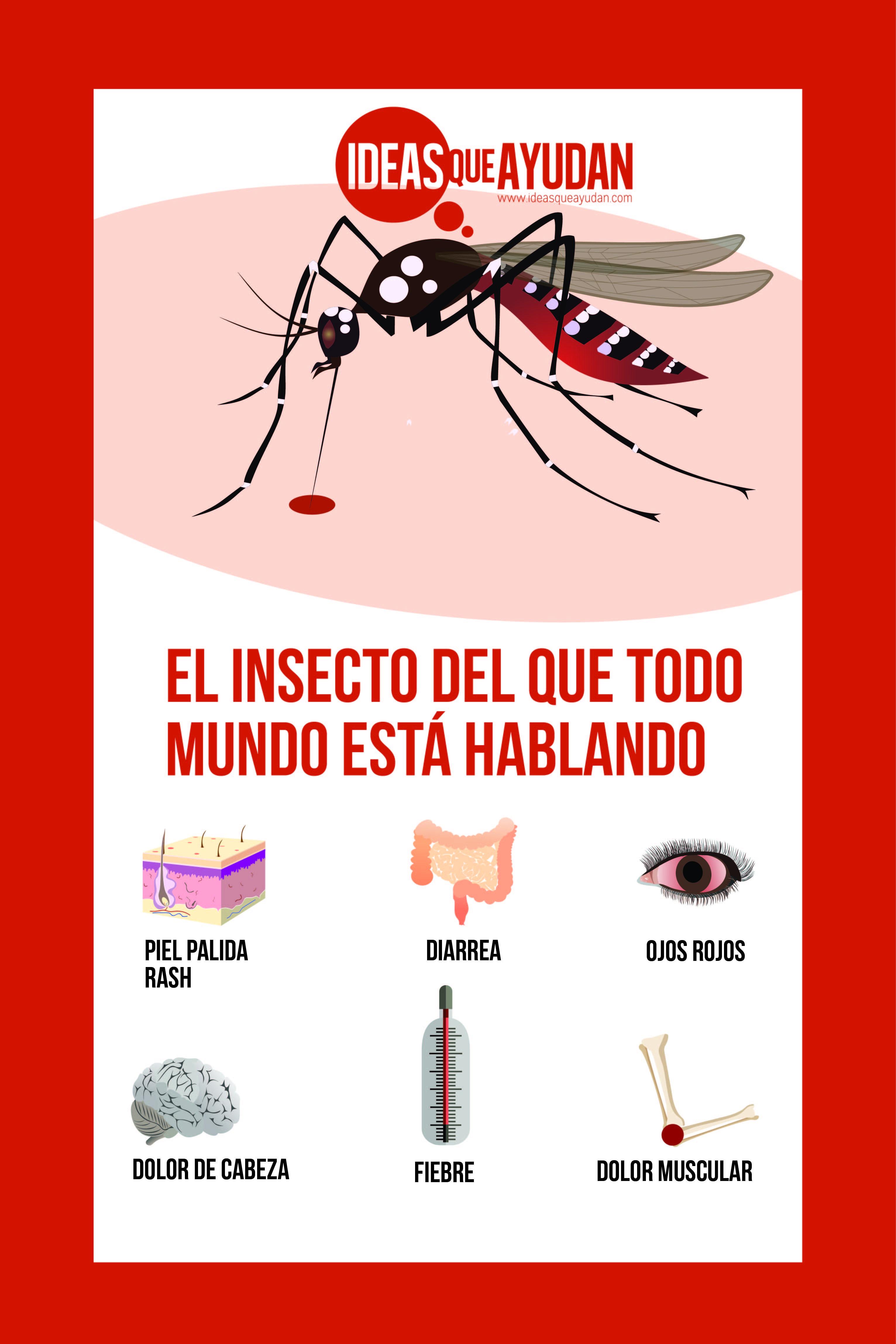 El insecto del que todo mundo está hablando