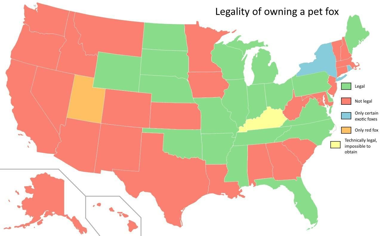 Legality of Owning a Pet Fox by US State.   Maps   Pinterest   Pet ...