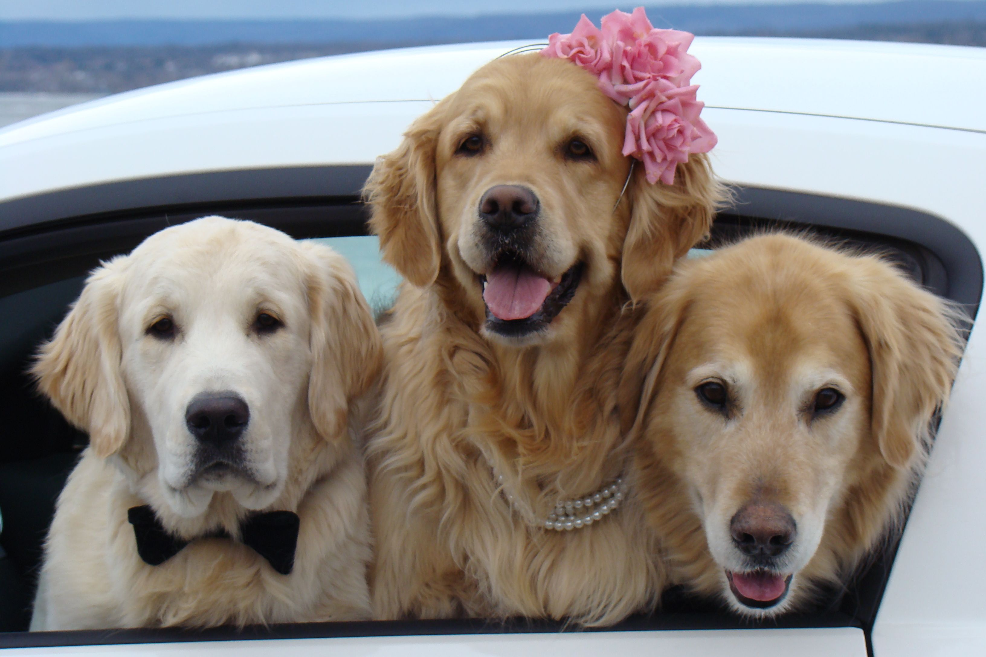 Posing In Our Car By The Ottawa River Dog Love Dog Heaven
