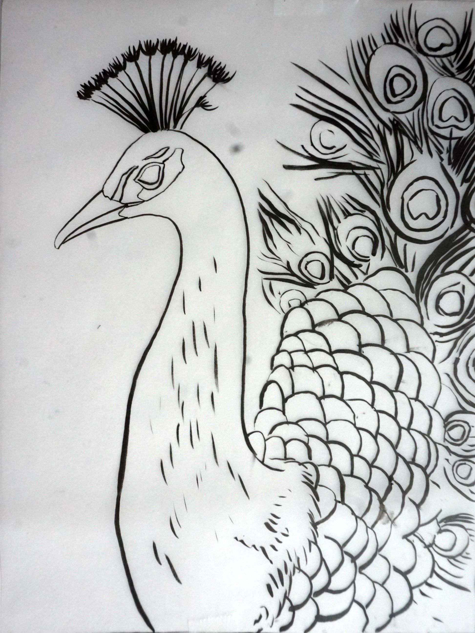 Outline drawing of the peacock