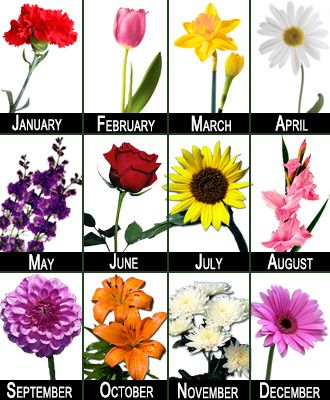 Birth Month Flowers Flower Club 12 Months Florist In Richmond Virginia Vogue