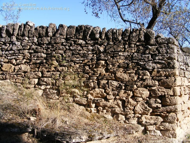 Muros piedra barreras y mojones muro de piedra 2289 - Muro de piedra natural ...