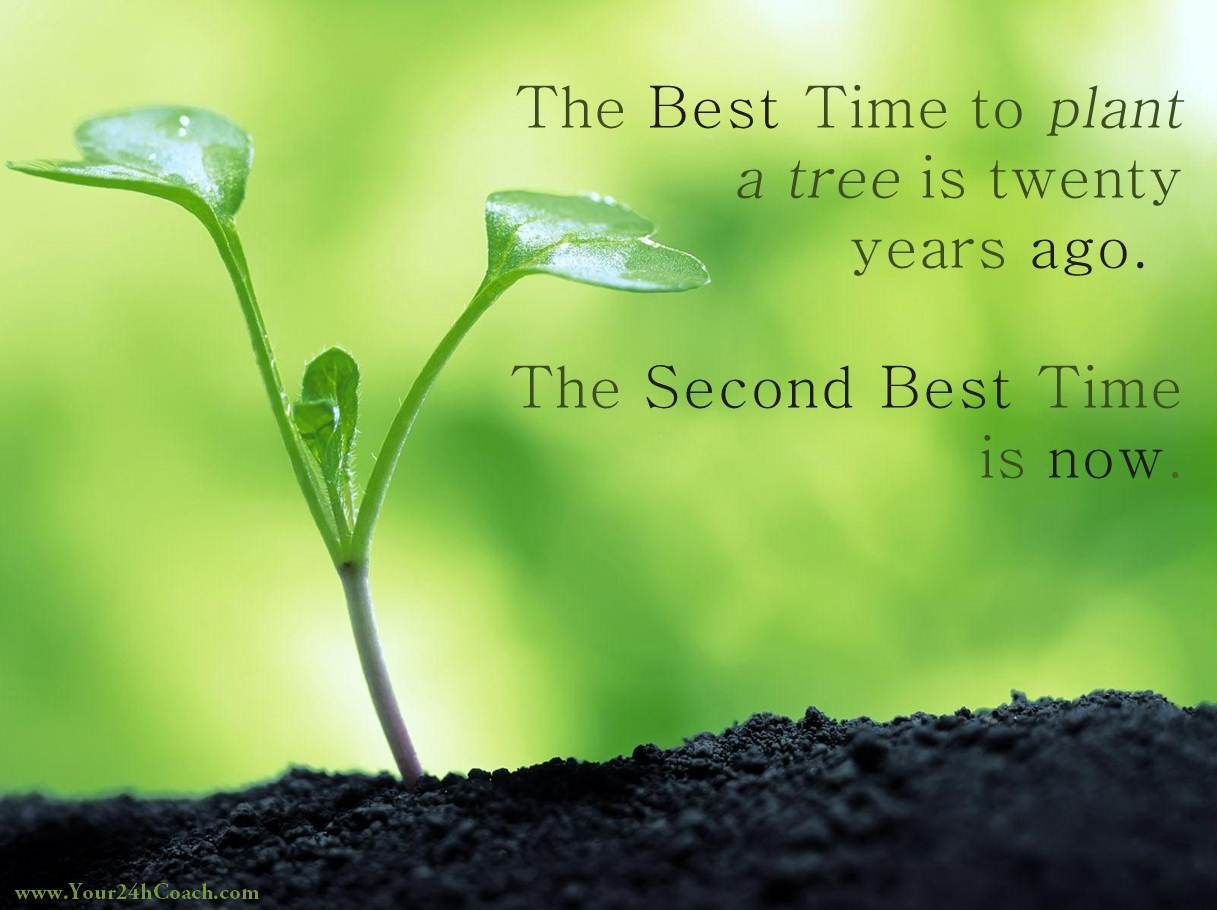 The Best Time To Plant A Tree Is Twenty Years Ago The Second Best