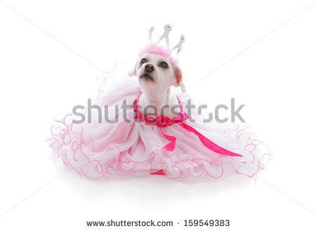 Mexican Chihuahua In Pink Dress And Tiara Putamadressonmuertes Dog Wear Pamper Pets Princess Tiara