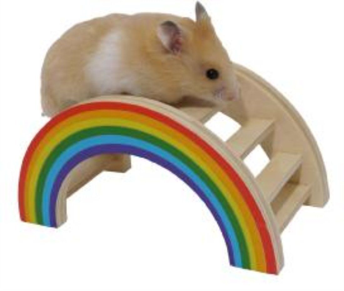 Dwarf Hamster Cages Uk Hamster Toys Cute Hamsters Small Pets