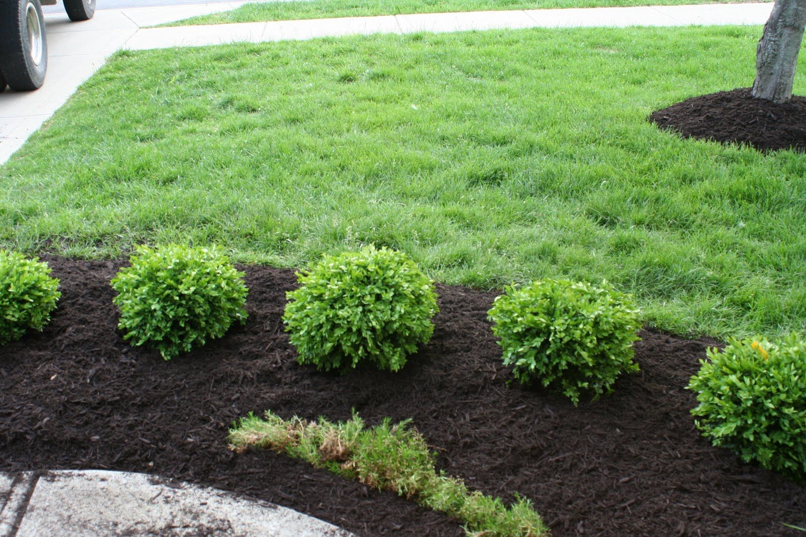 Favorite Bushes for Landscaping Ideas  Design Ideas & Decors