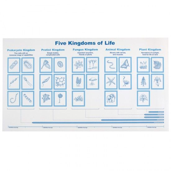 After 2nd great lesson that involves the coming of life in – Kingdoms of Life Worksheet