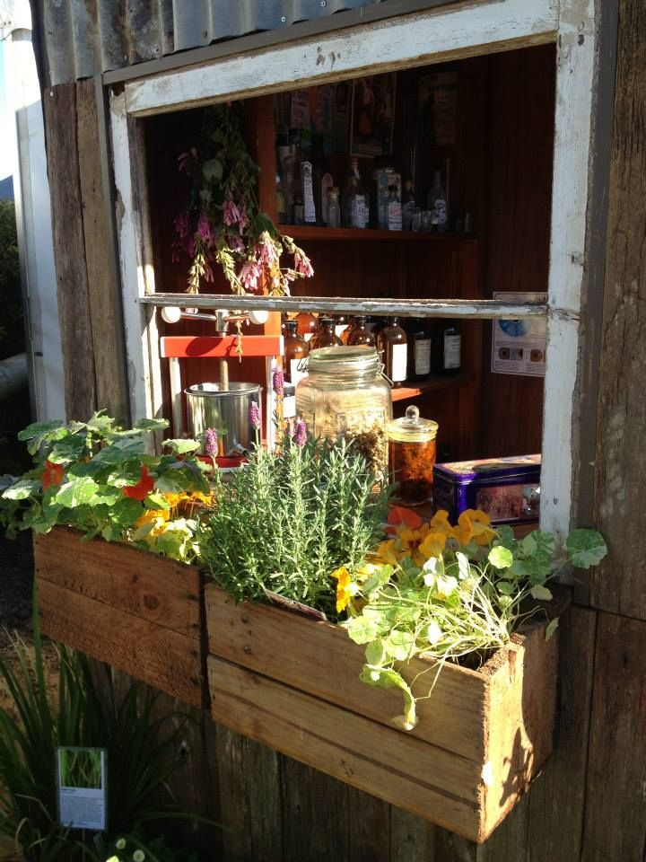 window garden - medicinal herbs - Maleny Queensland AU ...