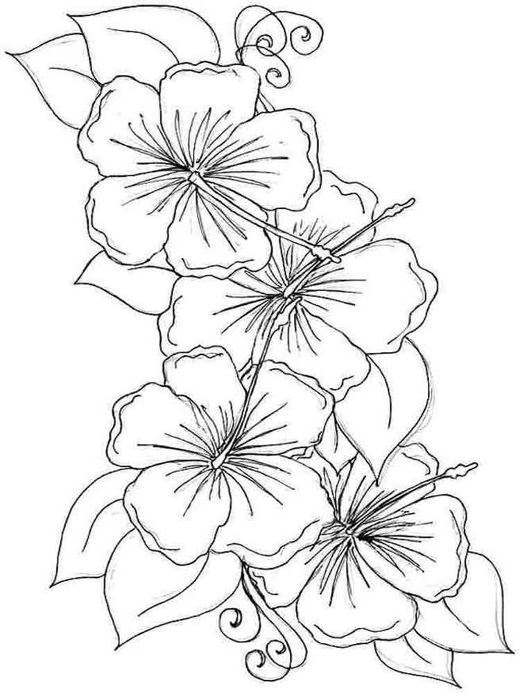 mycoloring-pages.com images flowers Hibiscus Hibiscus-flower ...