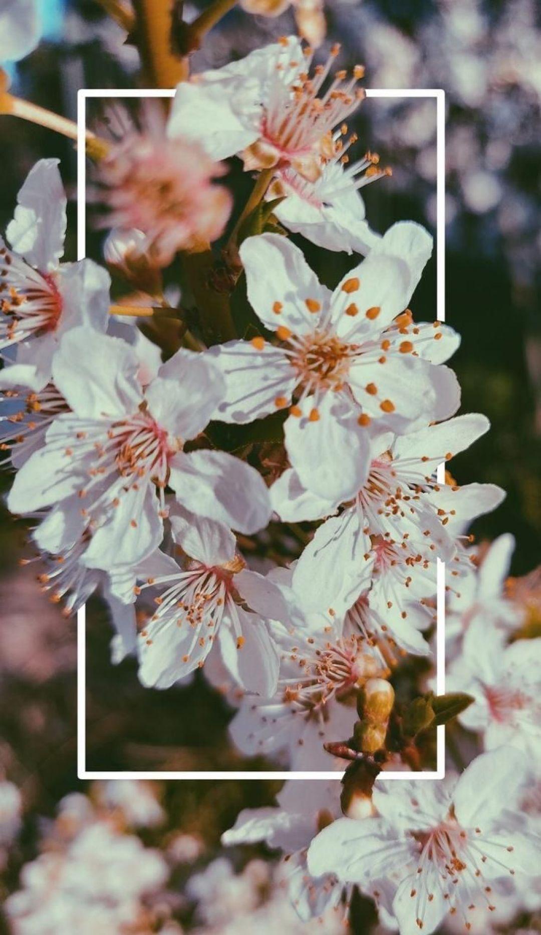 Aesthetic Hd Iphone Wallpapers Flowers Di 2020