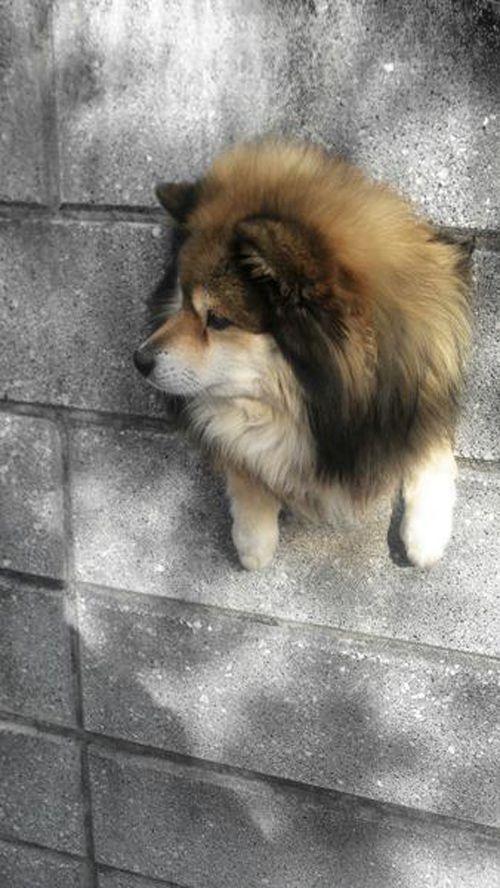 《壁犬》從牆壁洞裡探頭出來已經變成狗狗間的新流行惹嗎ww - 圖片7